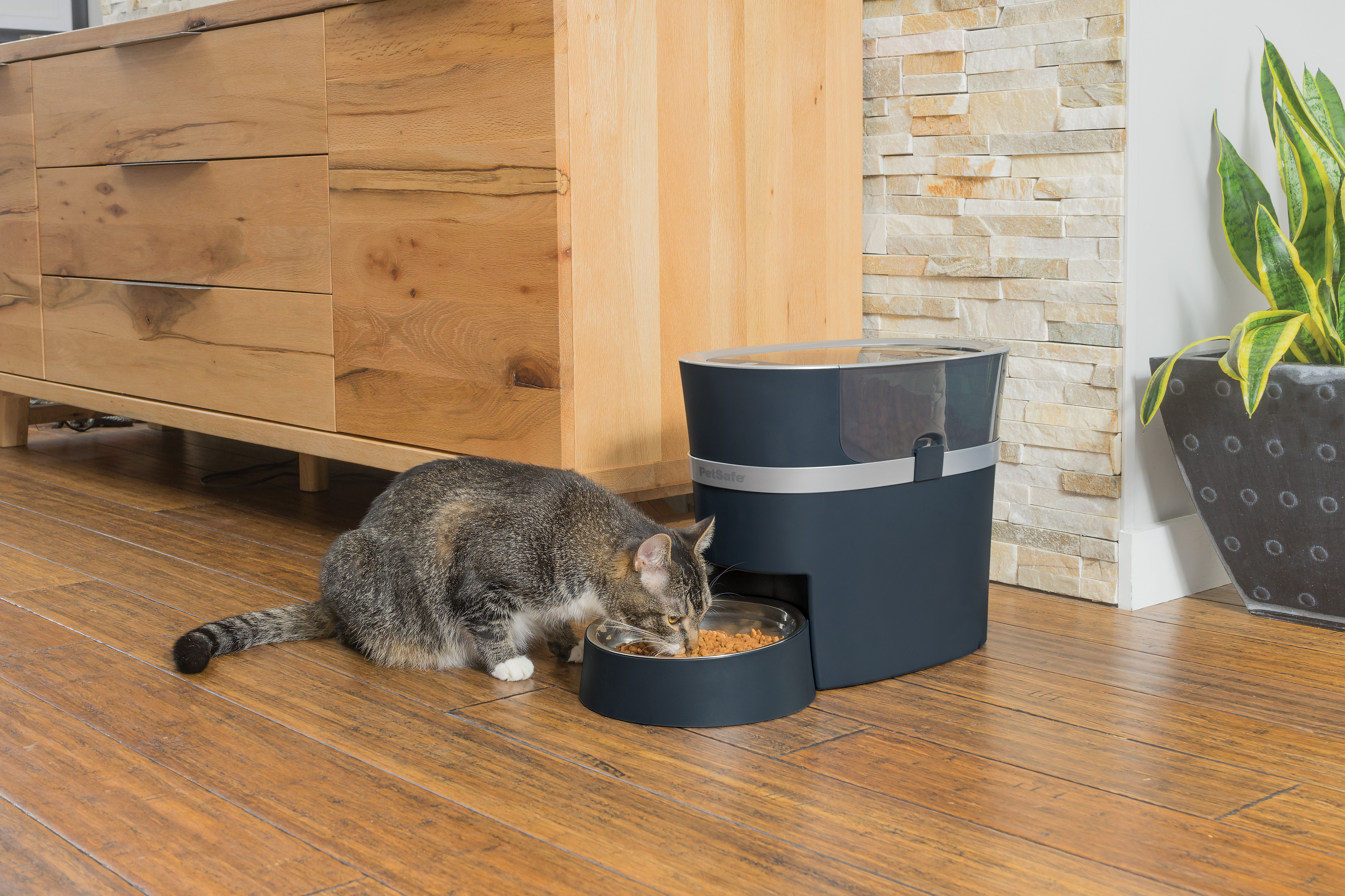 cat automatic green grey cats stimulo for comfypet feeders products feeder aikiou
