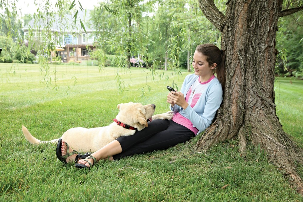 Stubborn Dog Stay + Play Wireless Fence - Click Image to Close